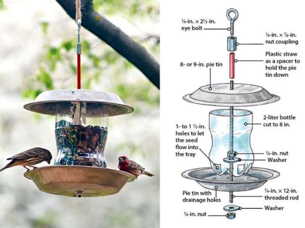 2 Liter Plastic Bottle Bird Feeder