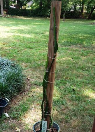 Diy Dragon Fruit Trellis Plant