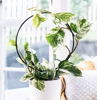 DIY Infinity Circle Or Hoop Trellis For Indoor Potted Plants