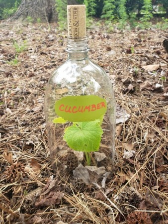 Diy Plastic Bottle Garden Cloche