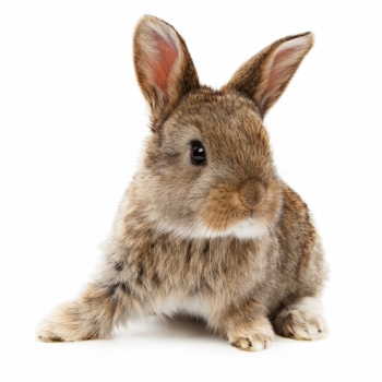DIY Homemade Rabbit Repellent Recipe