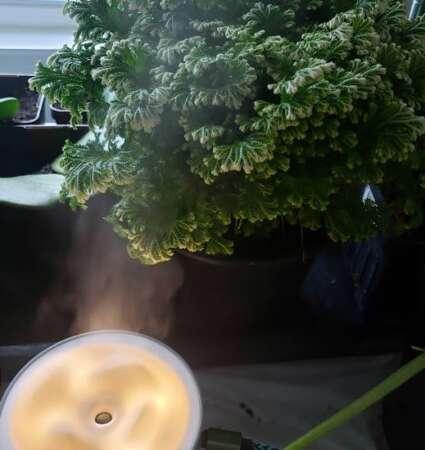 Frosty Fern Humidifier
