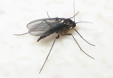 How To Get Rid Of Fungus Gnats – What Works And What Doesn't