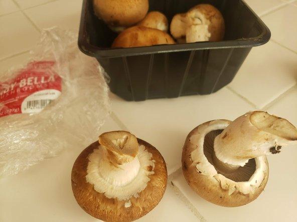 Mushroom Culture Veil