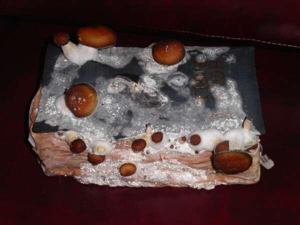 Mushrooms growing in bible