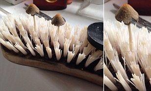 Scrubbing Brush Mushrooms