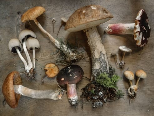 Mushroom Growing Kit Results And Review