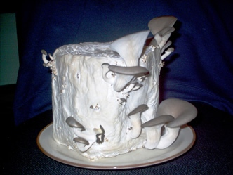Oyster Mushrooms Growing On Toilet Paper