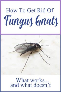 Pinterest Fungus Gnats