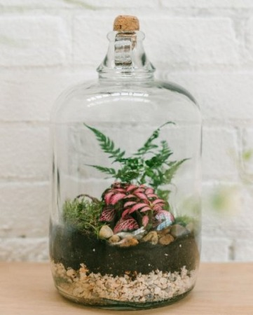 Soda Bottle Terrarium Inspiration