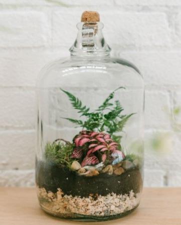 Soda Bottle Terrarium Inspiration