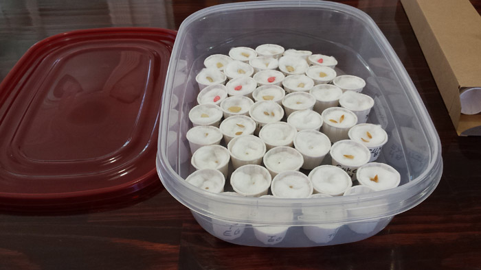 Seed cups arranged inside plastic container